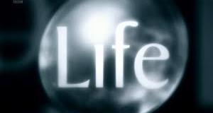 قانون الجذب و جوهر الحياة
