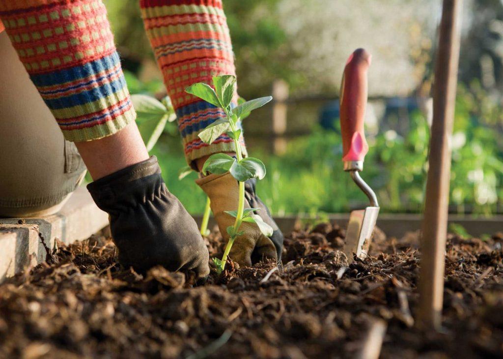 رعاية حديقة