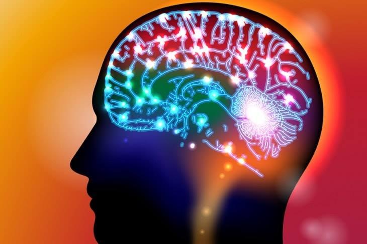 كيف يقرر العقل ما الذي يجب أن يتعلمه؟