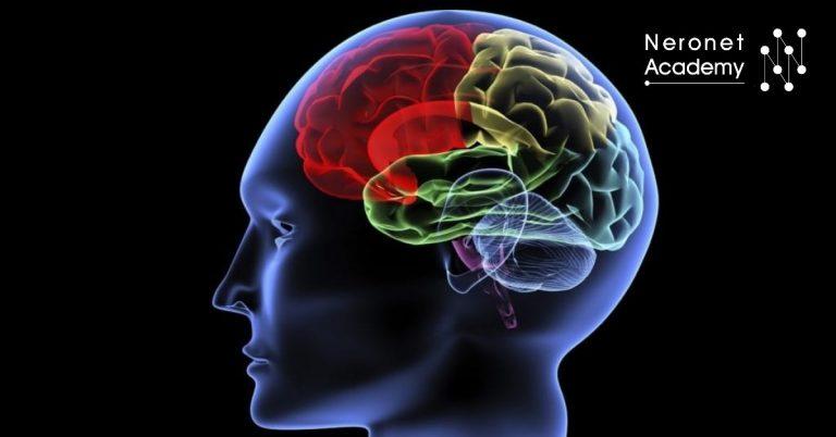 العلاقة بين الفوتونات الحيوية في الدماغ والوعي المرتبط بالضوء