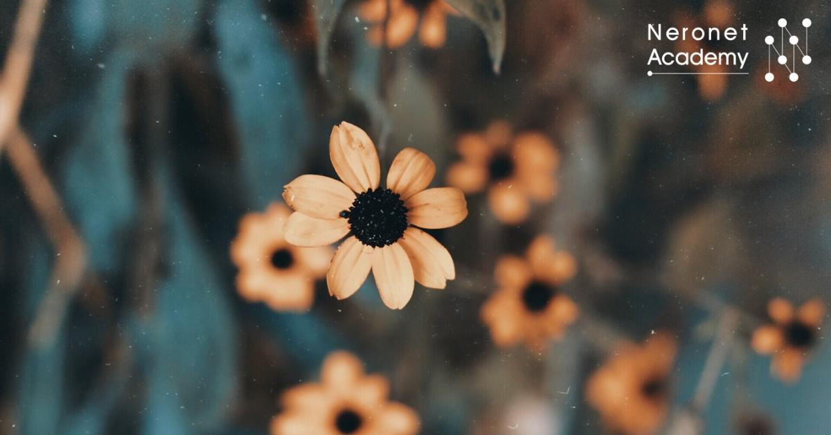 حيل سهلة؛ ستجعل الزهور نضرة لفترة أطول