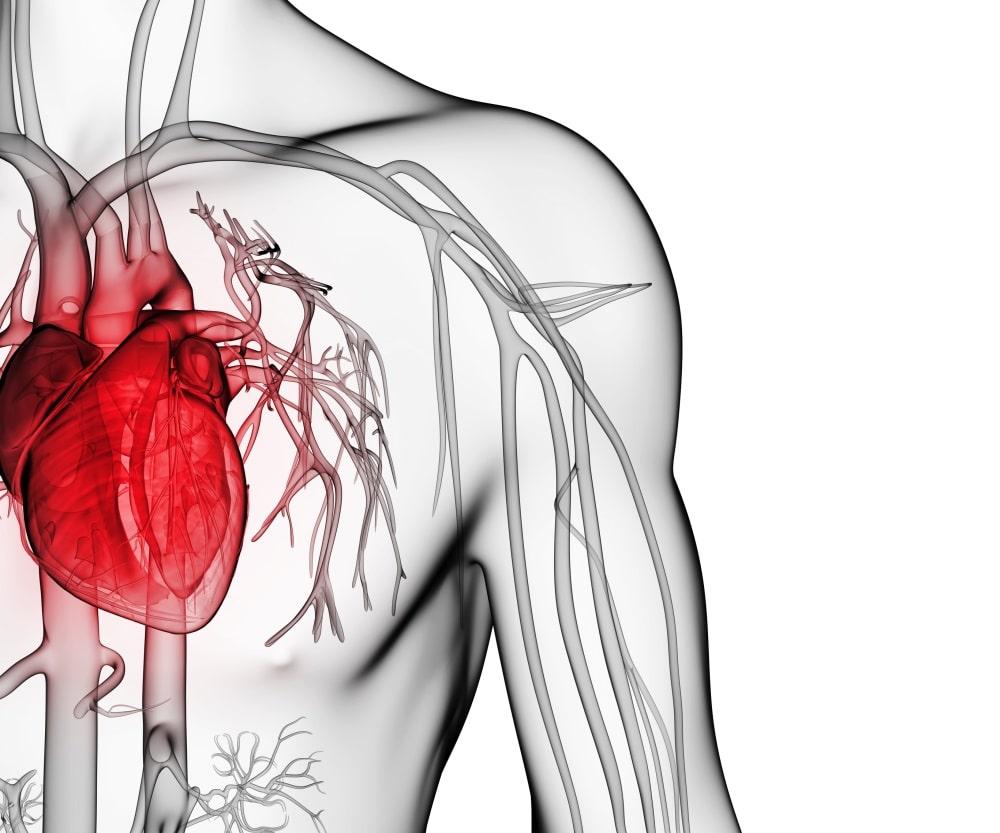 كيف تؤثر تمارين القلب والأوعية الدموية على قلبك؟